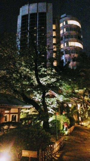 夜の中庭から望むさくらタワー